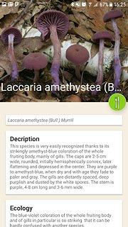 Mushrooms app - snímek obrazovky